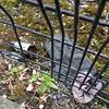 My Lagan gLove #onelostglove #Belfast