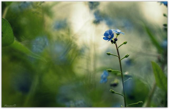 Douceur bretonne bleue... On, Panasonic DMC-GX7, LUMIX G VARIO 45-150/F4.0-5.6