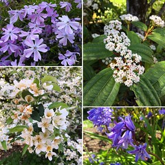 Reminder: Share your #flower pics with us all month long! Use #LWTechMayFlowers and/or tag us @thelwtech in your photos! . . #thelwtech #lwtech #mayflowers #FlowerPower #Spring #ReadySetGrow #kirkland #kirklandcollege #lakewashingtontech #lakewashingtonin