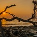 Driftwood Beach Sunrise by The Suss-Man (Mike)