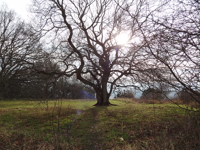 winter sun through tree, Sony DSC-HX9V