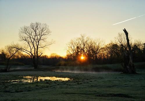 statearboretumofvirginia sunrise blandy mist