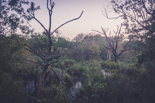 Les marais de la Brière