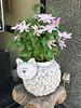 Photo:ネコ鉢 By cyberwonk