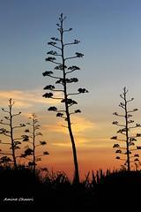 sunset ! (sidi bou said , Tunisia)