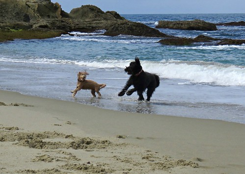 It's the Little Things, like seeing Benni back at the beach finding a new friend to run with... | by Bennilover