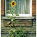 Urban Gardening by peterphotographic