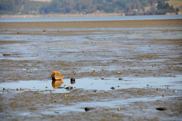 Warrington Mudflats, Nikon D5000, AF-S DX VR Zoom-Nikkor 18-200mm f/3.5-5.6G IF-ED [II]