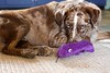 Purple Fish Toy Still Popular