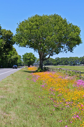 landscape scenery road field flowers wildflowers spring trees newberry florida