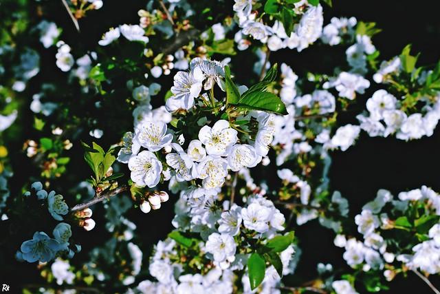 Blossoms @springtimebouquet