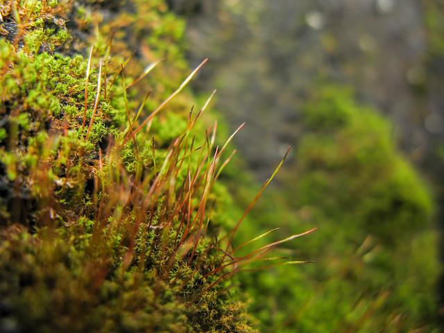 Moss, Canon POWERSHOT G7