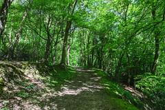 Parc de Rouelles Lr-0075