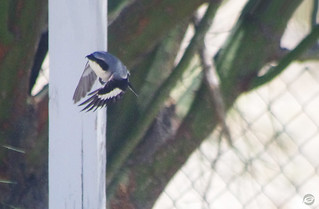 Shrike Flight