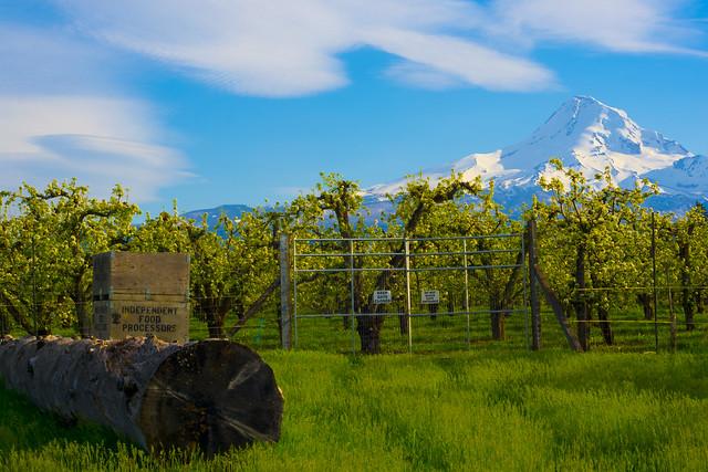 Mountain's Field, Nikon D3400, Sigma 70-300mm F4-5.6 APO DG Macro HSM