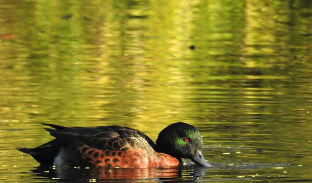 Chestnut Teal - how many shades of green?