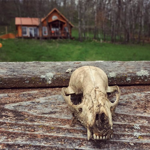 Land of 1.000 Skulls #Viroqua #Driftless #Wisconsin