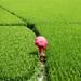 go green by Sabina BD