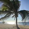 Current view! #caymanbrac #caymanislands #beach #beachlife #paradise #yourstoexplore #ilivewhereyouvacation #surreal #coconuttrees #barrysjerkchicken #sea #ocean #oceanside #seabreeze #coolbreeze