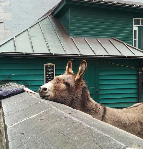 We met an adorable donkey at the Anglican cathedral this morning! His name is Aldo.
