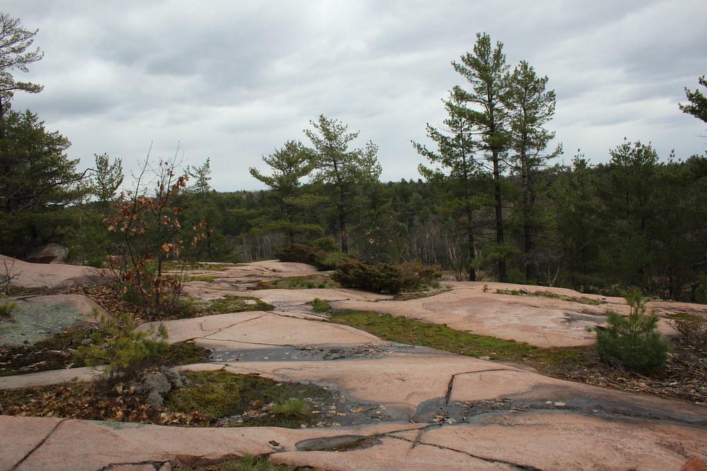 Cranberry Bog 09
