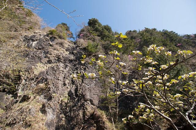 20150510-皇海山-0262.jpg