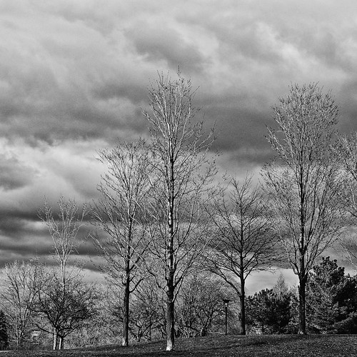 2017 2017©rpd'aoust aperture3 april arbres avril bw blackwhite d90 formatcarré landscape montréal nikkor50mm nikon nikond90 noiretblanc parcjarry paysage printemps pro2 silverexef slowphotography spring squareformat trees