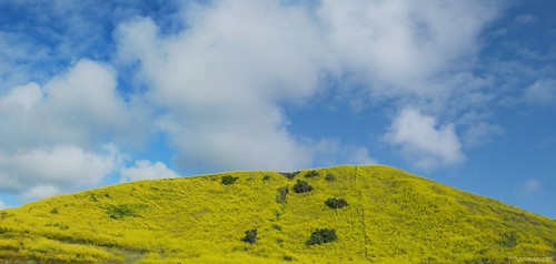 springinsocal socal southerncalifornia sanjuancapistrano hillside hill yellow bluesky blue california ca clouds cloudsorangecounty cloudy cloudsbluesky theoc orangecounty oc outdoor goldenstate afternoon spring springtime springday springflowers mustard mustardflower hello yellowmustard panorama