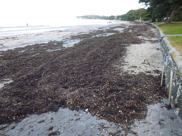 Seaweed Takapuna, Panasonic DMC-FH10