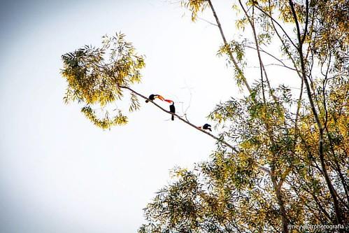 #araraquara #natureza #neyvillarphotografia