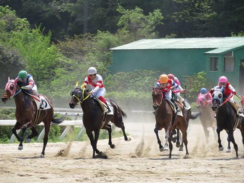 佐賀競馬場のレース風景