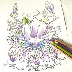 Taking breaks to colour in my hand-drawn Magnolia Magic page whenever I have the time. Relaxing fun  #magnoliamagic #quirkybotanicals #coloringpage #colouringsheet #adultcoloringpage #magnoliacoloring #magnoliaillustration #floatinglemons #flcolor #flcolo