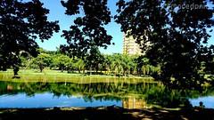 Céu azul refletido.  #crmacedonio.com #céuazul #photography #parque #ruadoporto #piracicaba #lago #lack #XperiaX #xperia #viajemais #turismo #fotografemelhor #arvore #agua #water #azulmagazine #natureza