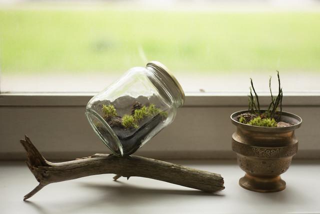 DIY closed terrarium