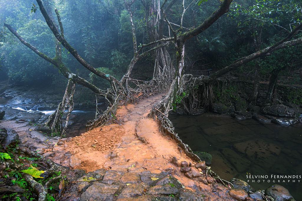 Living Root Bridge at Mawlynnong