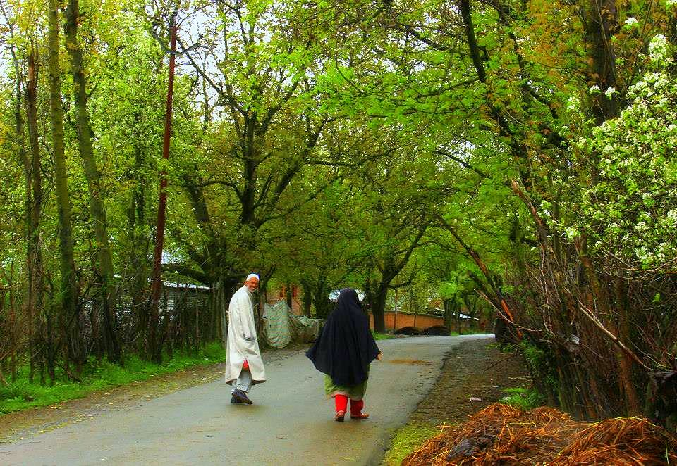 kokernag in spring is full of apple flowers