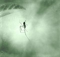 L'araignée ...!