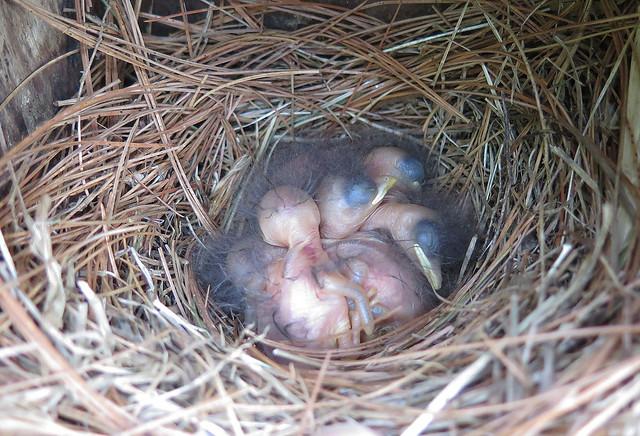 We have babies!!!