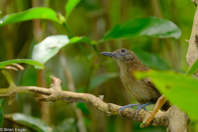 unknown bird in the, Fujifilm X-T2, XF100-400mmF4.5-5.6 R LM OIS WR