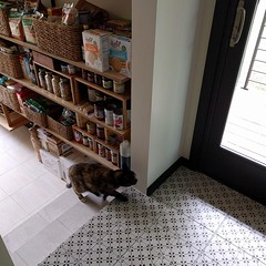 #kitty wants me to let him outside, I love that #kitchen #tile #floortile ... #pantry / #entry  #shelves #cat #calicocat #nwgreenhometour #greenhome #seattle