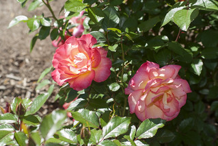 Brookside Gardens  (50)