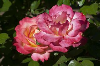 Brookside Gardens  (46)