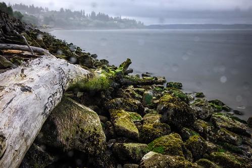 howarthpark landscape rain storm lowtide possessionsound shoreline seaweed beachlog trinterphotos longexposure drizzle