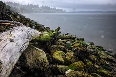 Howarth Park Shoreline with Drizzle
