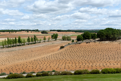Vineyards of Bodegas Aster