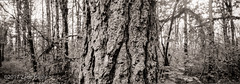 Bark #48