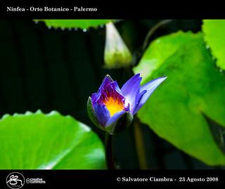 941_FSC4082_bis_Orto_Botanico