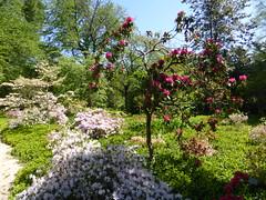 Planting Fields Arboretum - Oyster Bay (4)
