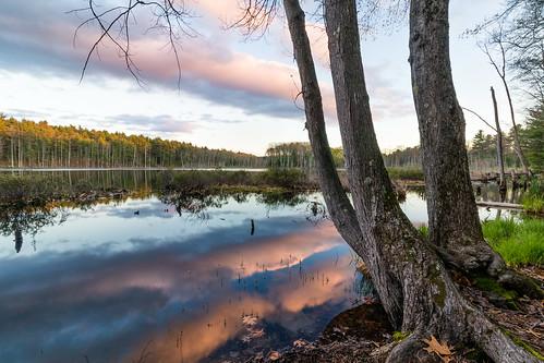pond sunset reflection tree nature outdoors nashua newhampshire newengland