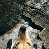 Tartufo al lago :pig_nose: #clc #canelupocecoslovacco #lake #dervio #dayoff